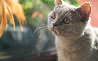Mintea și Pisica